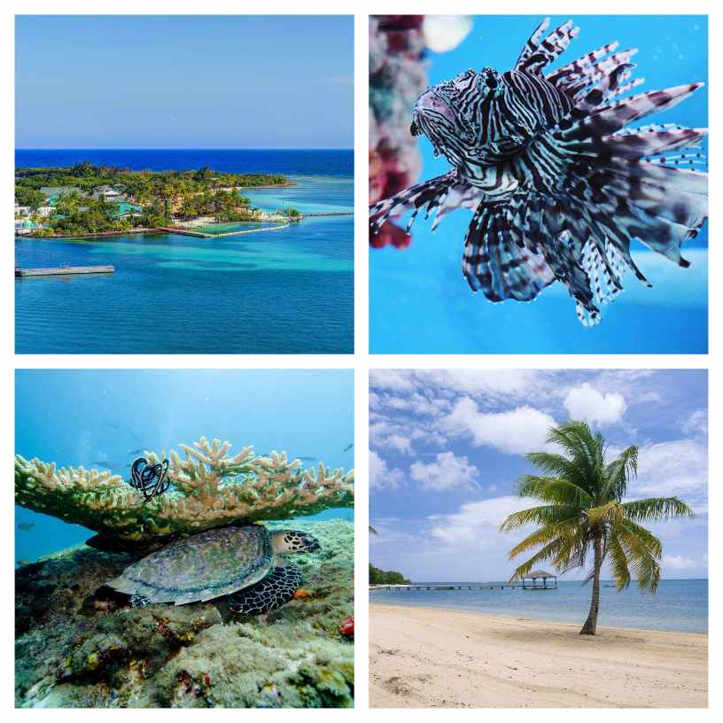 Retire to Roatan - All About Blue Water and White Sand