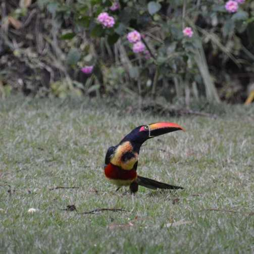 Paulette, there's a Toucan in our back yard!